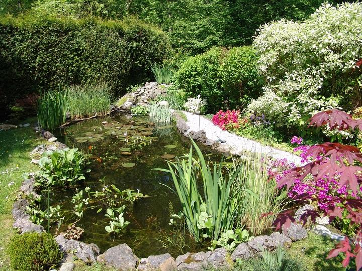 Comment créer son bassin de jardin
